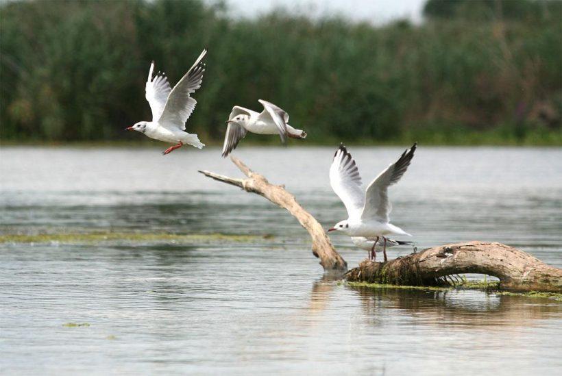 Erdélyen át a Duna-deltába 2